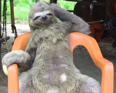 bradipo-seduto